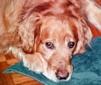 Humphrey D. Dogg
